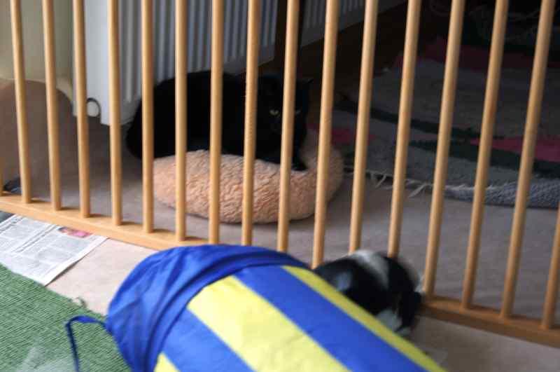 Caly hinter dem Gitter auf ihrem Polster