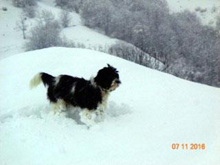 hier ist schon tiefster Winter, Babou liebt es ...